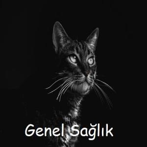 kedi-genel